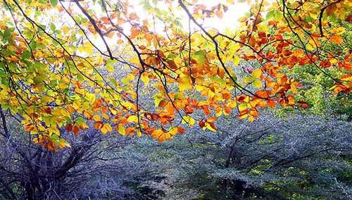 چراغ درختان که زرد و قرمز می شود پاییز از چهار راه فصل ها می گذرد دوازدهم