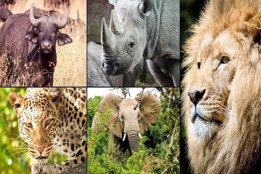 اطلاعات عمومی جالب درباره حیوانات